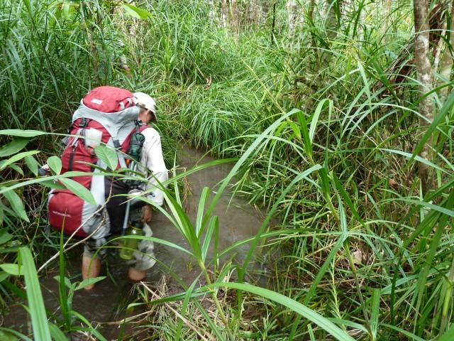 If you have had a decent wet season the swamps can be interesting. This is July 2012