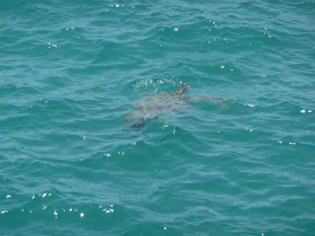 At Boulder Bay you may see large green sea turtles and reef sharks at the northern headland.